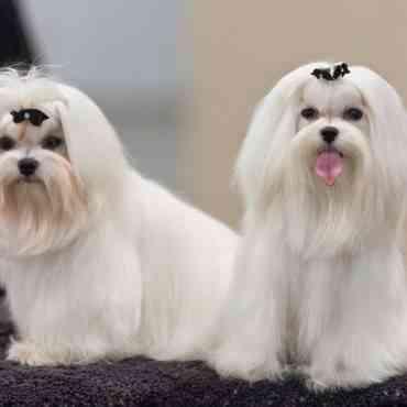 Perros de pelo largo: cuidados durante el frío