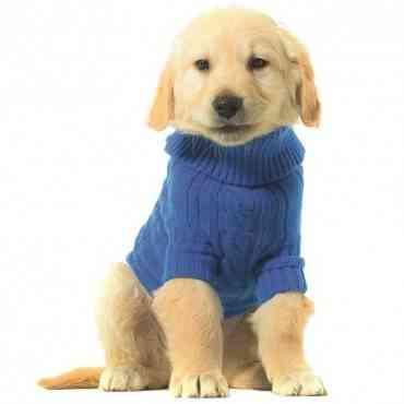 ¿Es necesario vestir a los perros?