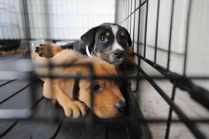 Adoptar un perro en España 1