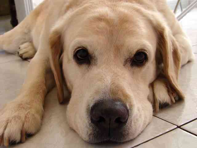 Alimentos nocivos para mascotas