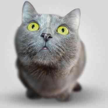 Estudio detalla cómo ven los gatos realmente