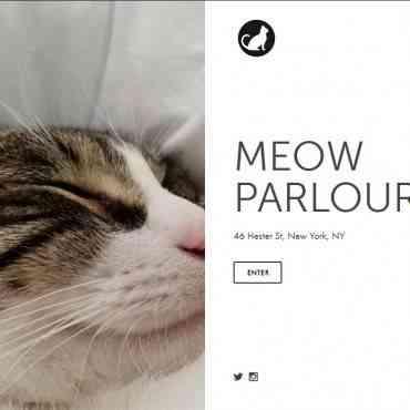 Abren un café para gatos en Nueva York, moda que crece