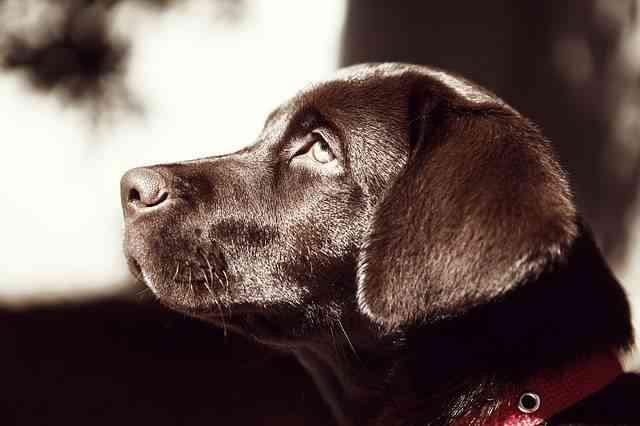 Cielo de los perros