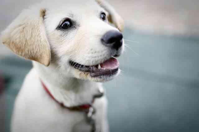 Edad de los perros