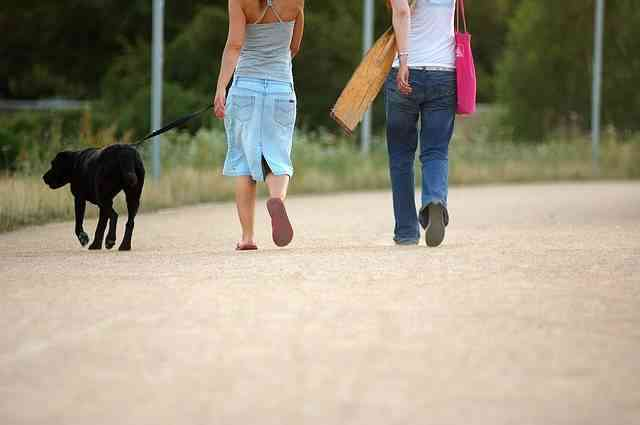 Enseñar a tu perro a andar con correa
