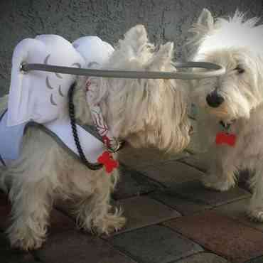 Muffin's Halo: accesorio de moda para perros ciegos