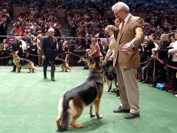 Nuevas razas de perros American Kennel Club