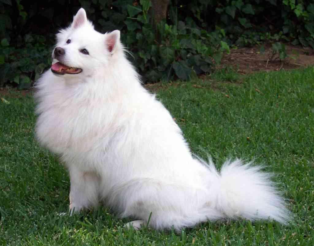 Pelo del perro en invierno