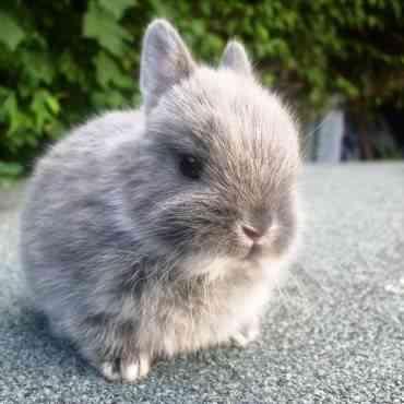 ¿Cúantos años puede vivir un conejo?