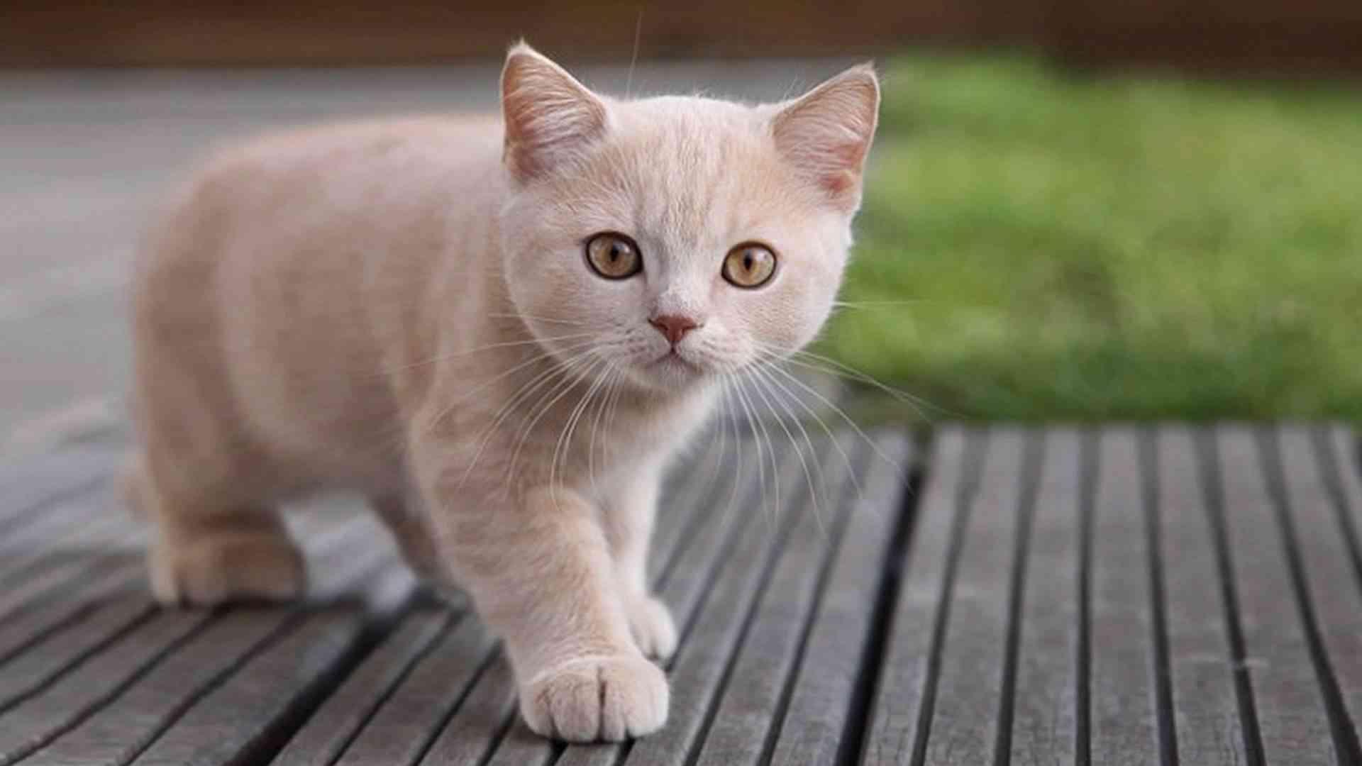 cosas que gustan a los gatos