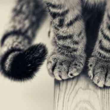 ¿Por qué se muerde tu gato la cola?