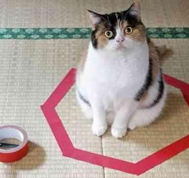 Los gatos y su gusto por los círculos
