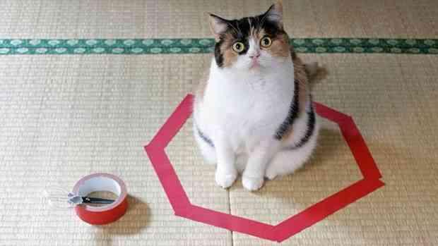 gatos y círculos