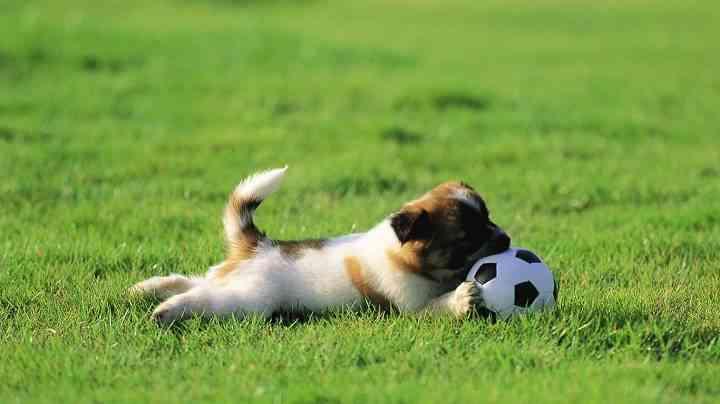 jugar mascotas