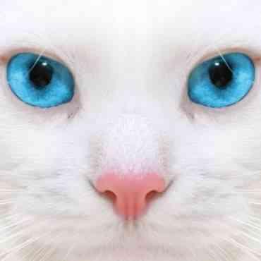La mirada en los gatos