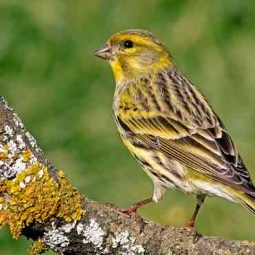 Cuidados básicos de los pájaros en invierno
