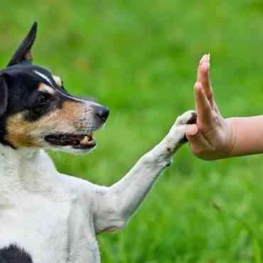 Aprende a interpretar el lenguaje corporal de tu perro