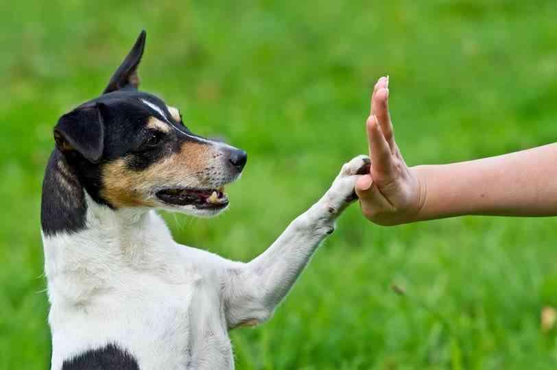 perro-lenguaje