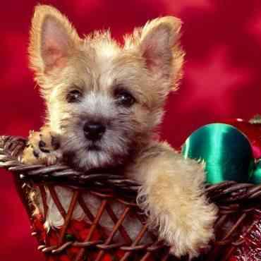 Regalos navideños para tu perro