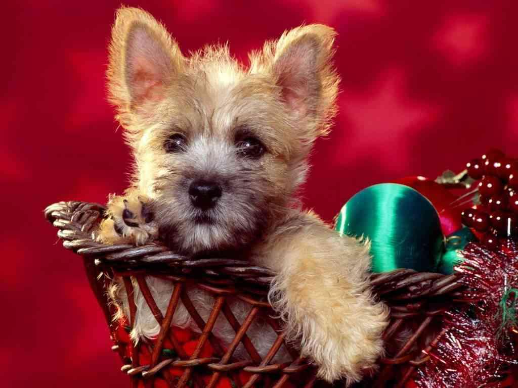 regalos navideños perros