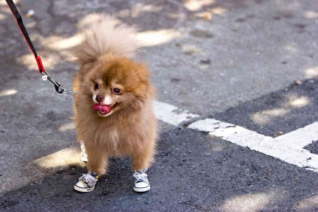 Calzado para perros
