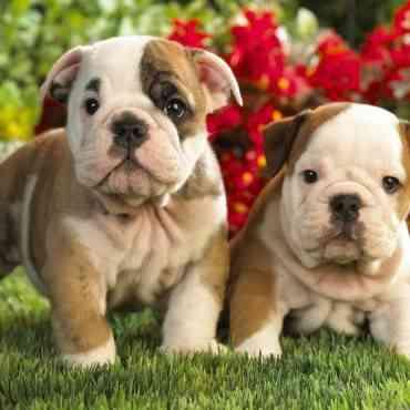 Escoger nuestra mascota: tips a tener en cuenta
