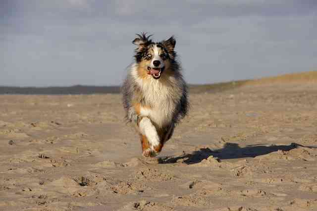 Mascotas en la playa