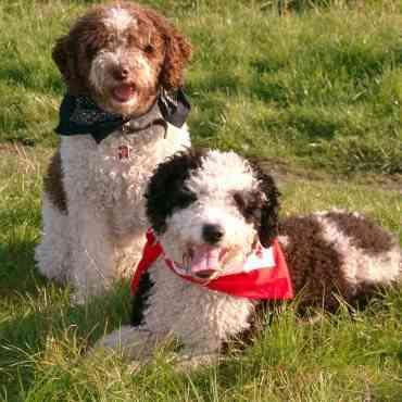 Perros miniatura: cuidados importantes a tener en cuenta