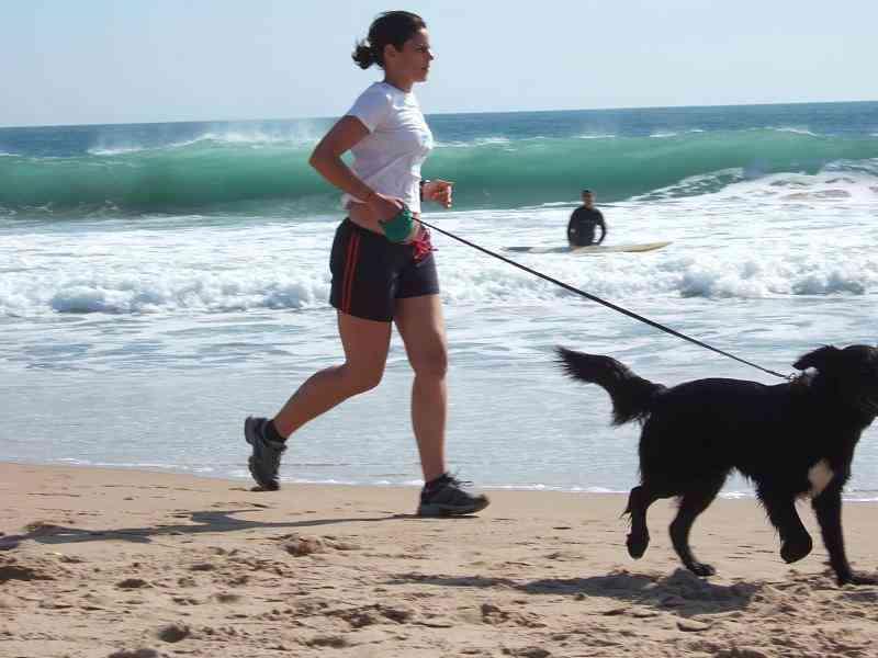 Razas de perros para corredores
