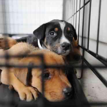 ¿Qué hay que hacer para poder adoptar un perro?