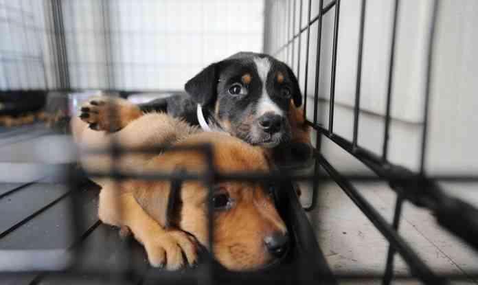 adoptar perro