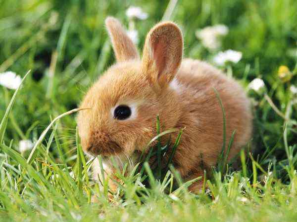 alimentos tóxicos conejos