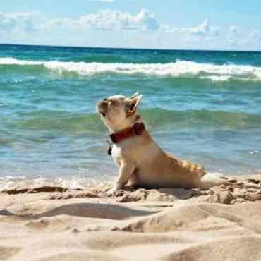 Pros y contras del sol en los perros