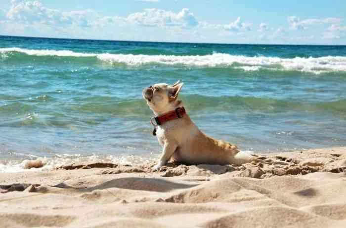 beneficios sol perros