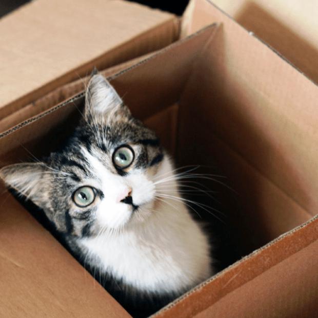 gato-mudanza