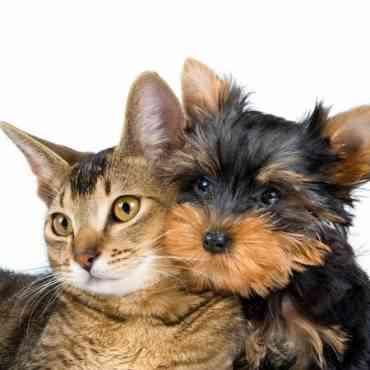 Consejos para que tu perro y tu gato se lleven bien