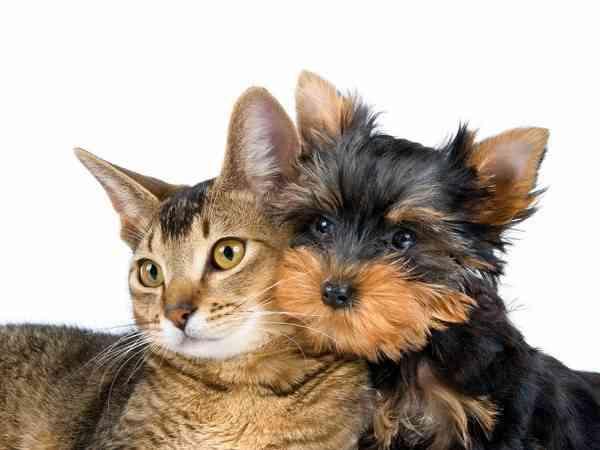 gato-y-perro