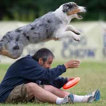 Juegos para estimular la mente de tu perro