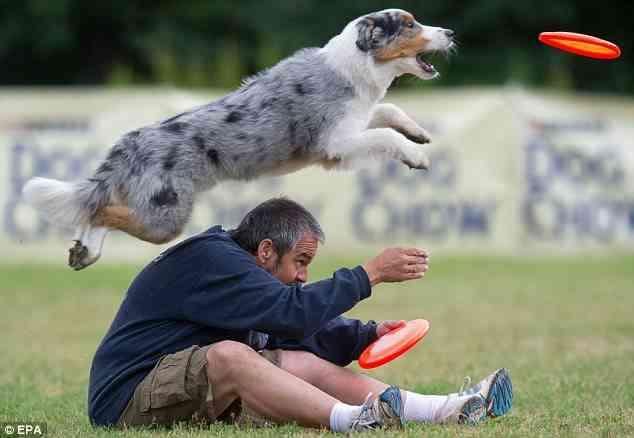 juegos con el perro