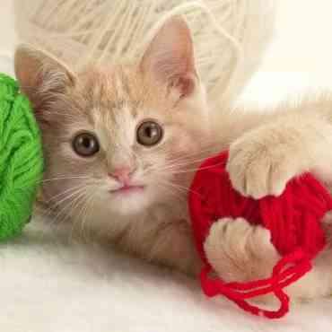 Productos del hogar peligrosos para tu gato