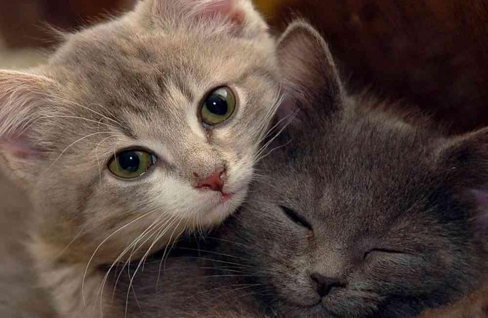 años de vida gato