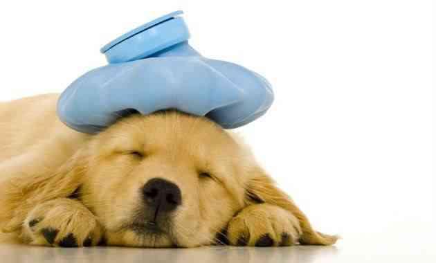 automedicar perro