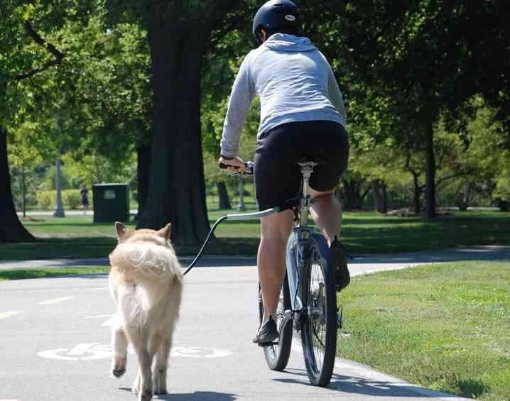 deporte perro