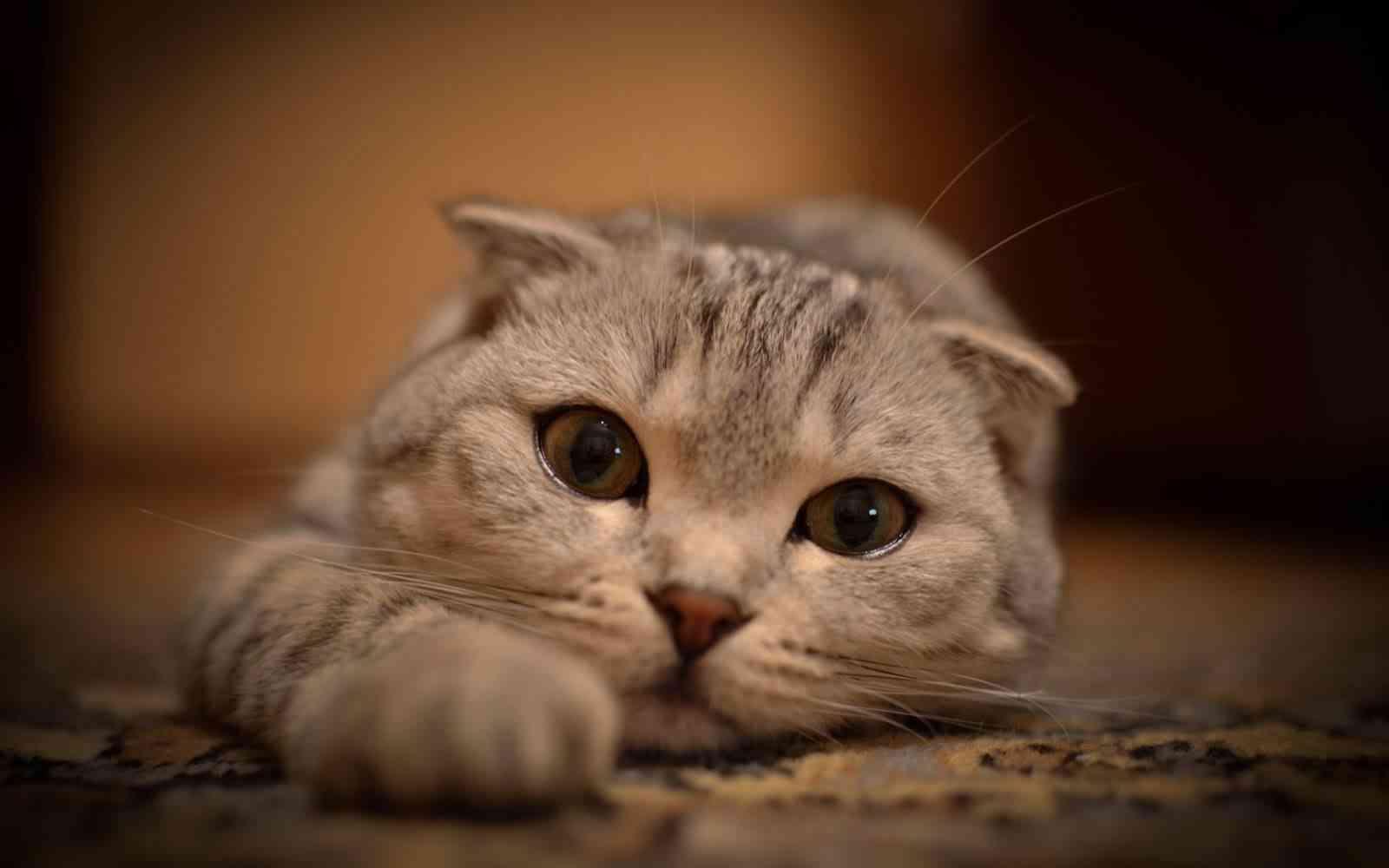 gatos escapar casa