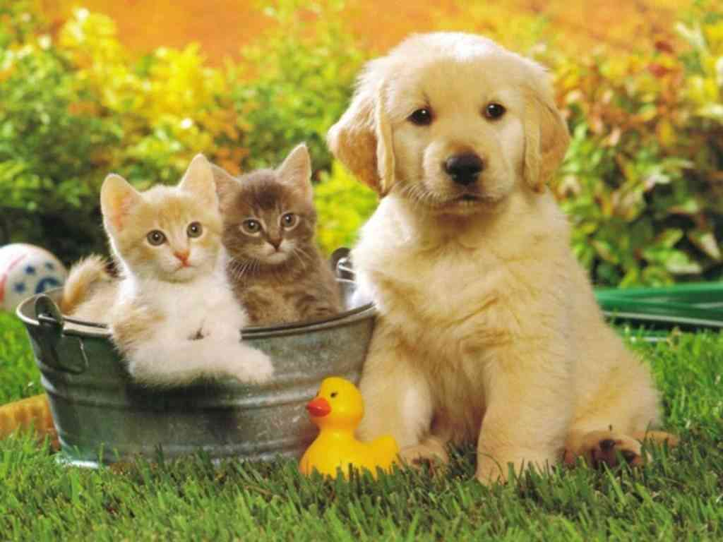 nombre mascotas