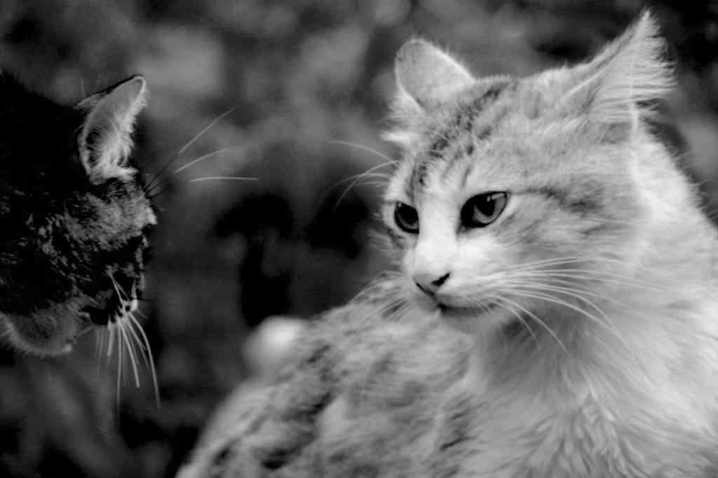 Castrar un gato 1