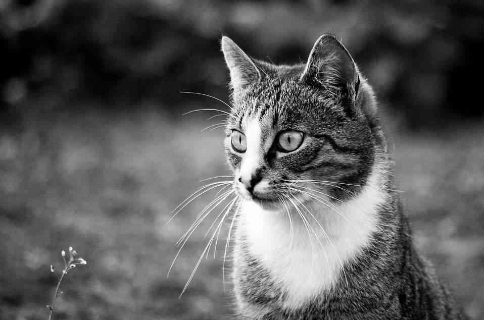 Castrar un gato 2