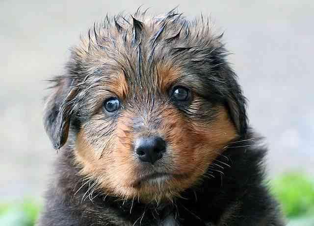 Consejos para cuidar un cachorro 1