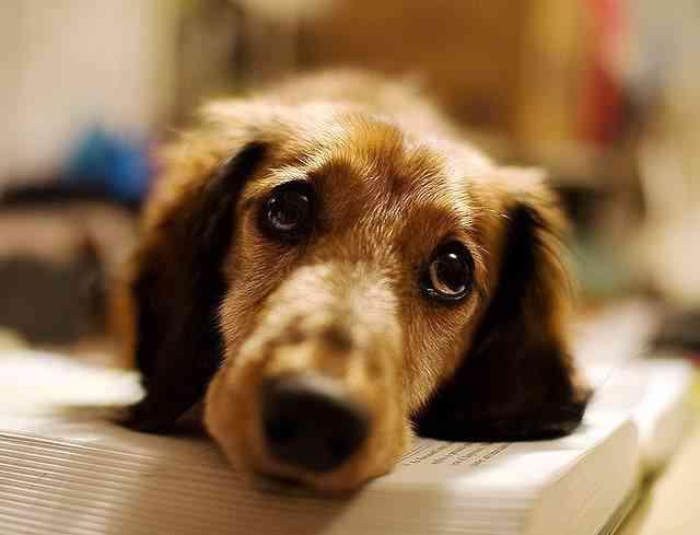 Consejos para cuidar un cachorro 2