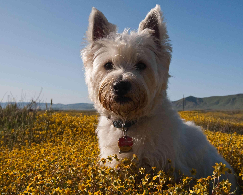 Consejos para cuidar un cachorro 3
